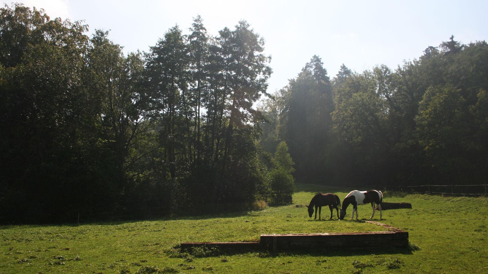 Weiden_springplatz
